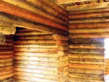 Ошибка строителей. Стены поражены грибком